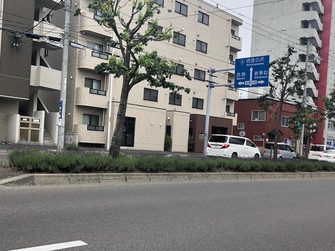 札幌市西区 ラベンダー通り