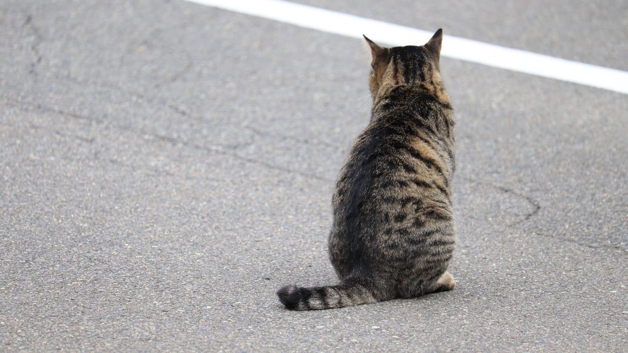 猫の譲渡会 札幌動物管理センター