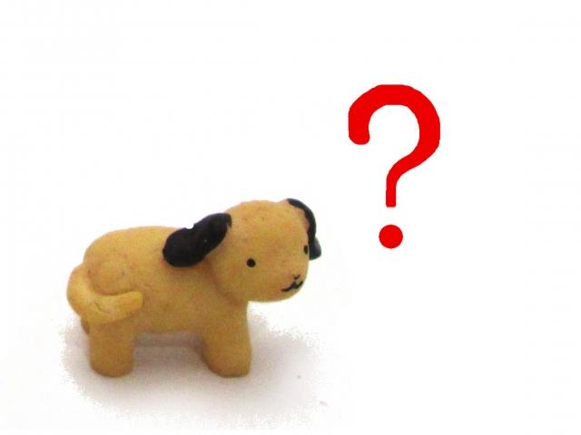 札幌 迷子犬