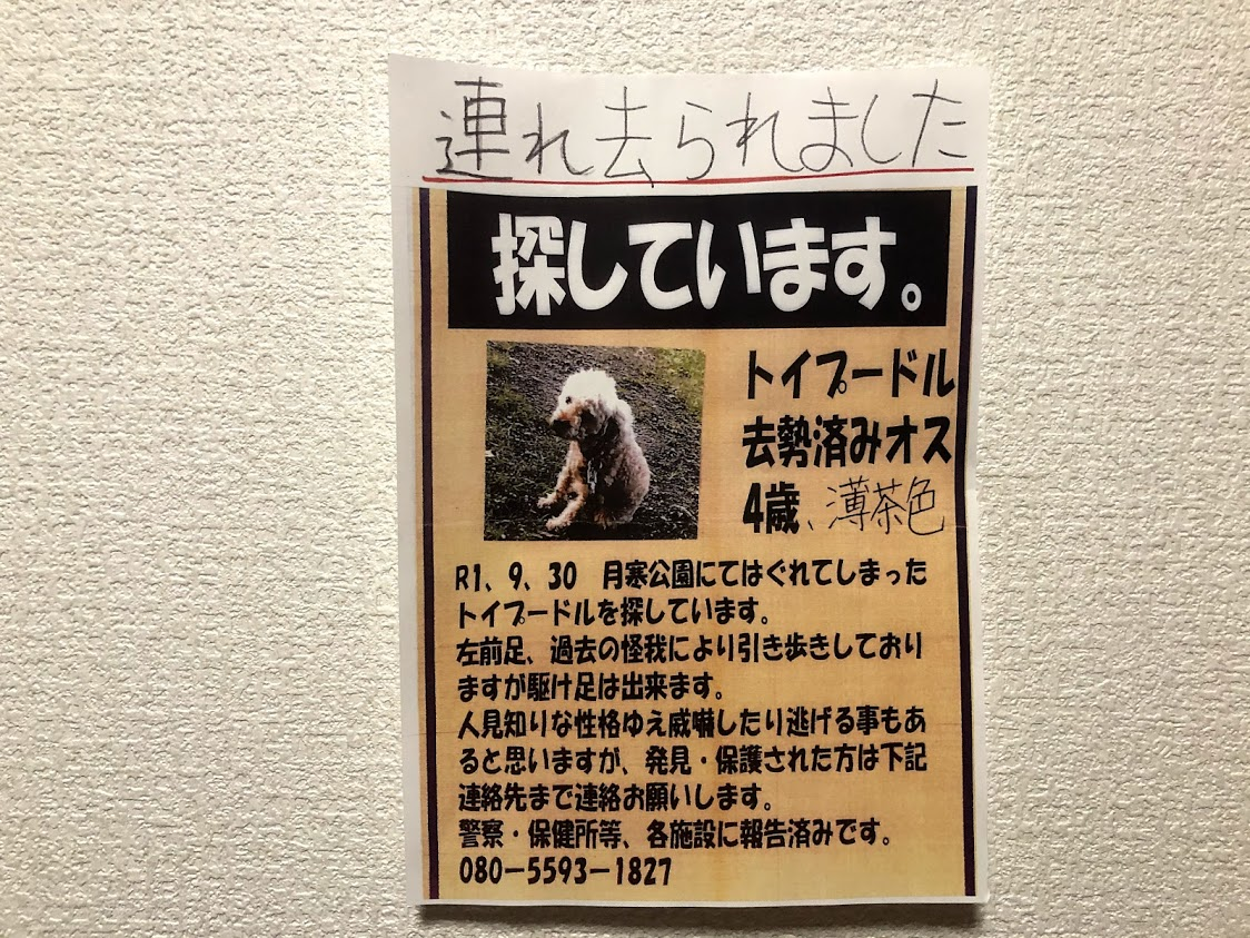 札幌 トイプードル 迷子犬